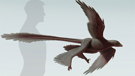 Scientists discover four-winged dinosaur fossil in China