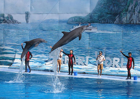 India bans use of dolphins for commercial entertainment