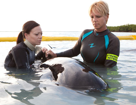 Highest mortality year for dolphins, whales