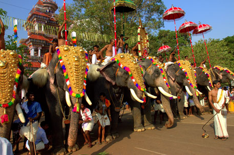 About 100 elephants paraded in Kerala's Thrissur Pooram without permission