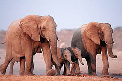 Aerial survey to count elephants in Africa