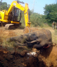 Elephants unsafe in Odisha