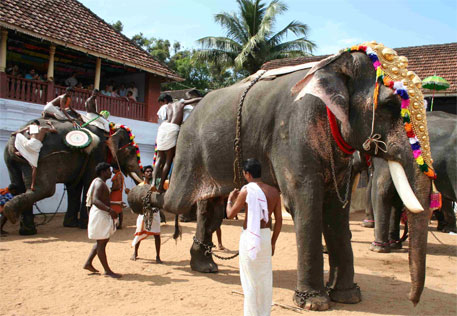 Supreme Court issues notices to nine states on welfare of captive elephants