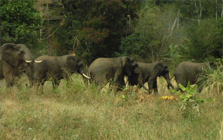 Tuskers going tusk-less in Tanzania