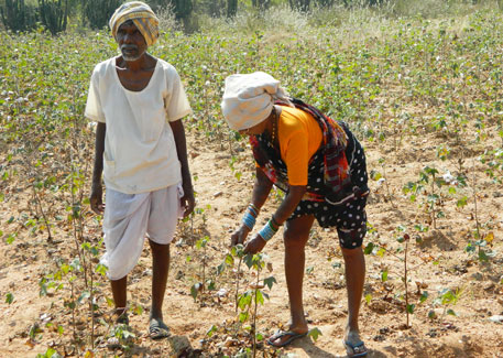 95 farm suicides in a month in Andhra Pradesh