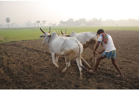 Procurement prices low in Maharashtra since 1996; farmers bear the brunt
