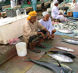 Algae outbreak in Arabian Sea threatens fisheries