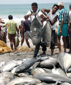 India overexploiting fish resources: Greenpeace