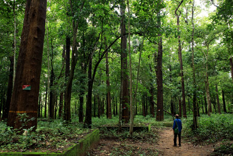 MoEF spells out parameters for identifying inviolate forest areas