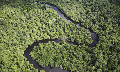 The Amazon, along with other beautiful forests, may soon be a thing of the past (Credit: WWF)