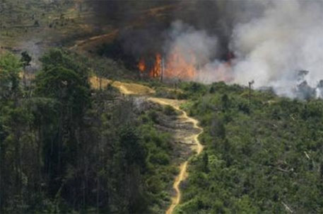 In Indonesia, large swathes of swamplands have been burnt to make way for palm plantations  (Photo: US Department of Agriculture)