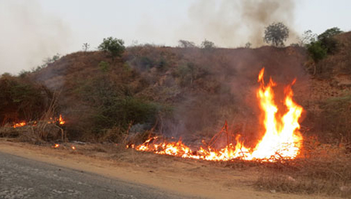 Fire has arguably been a key part of forest management in India for about 50,000 years to clear dry dead undergrowth and fertilise the soil