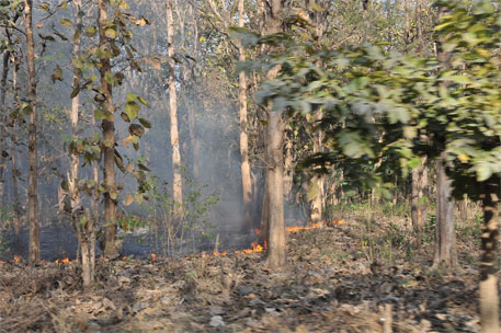 A forest fire in Corbett National Park, Uttarakhand (File photo)