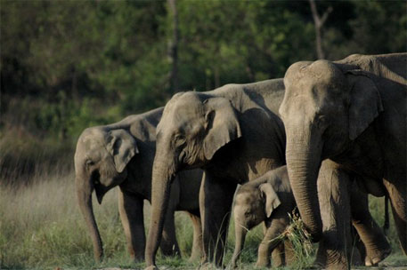 Green tribunal stays wall construction in Rajaji National Park