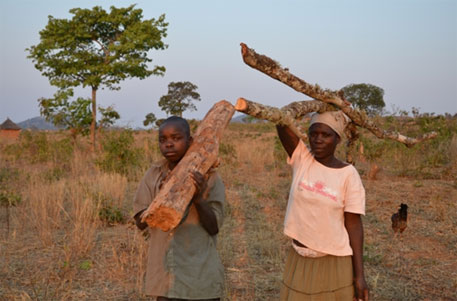 62 per cent of un-electrified households use wood as the main source of energy (Photo courtesy World Food Programme)