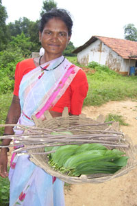Community forest rights for Gondia's tribal villages