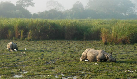 Elections hamper setting up police station in Kaziranga to curb poaching