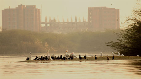 NGT stays construction in college campus in Soor Sarovar bird sanctuary