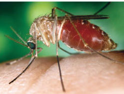 Breakthrough in search for new malaria cure