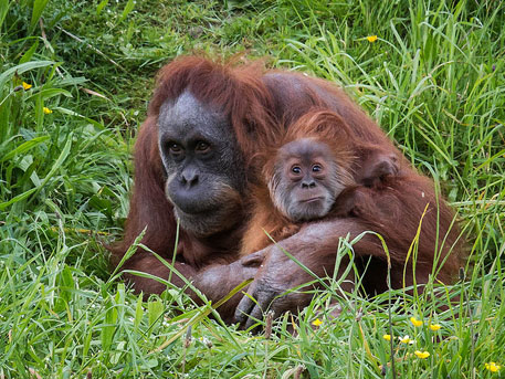 Borneo's wildlife habitat to shrink by a third in 65 years