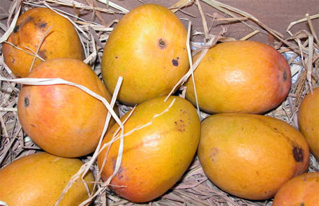 Ban on mango import affected India's export of fresh fruits last year