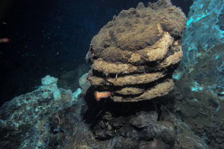 Deep-sea microbes believed to be missing link to how we evolved