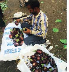 PM qualifies Bt brinjal moratorium