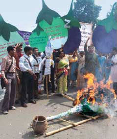 Public protests mount against Bt brinjal