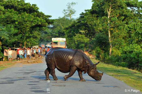 Green tribunal notice on widening of highway passing by Kaziranga