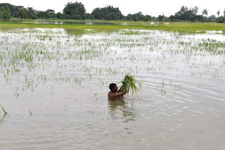Farmers interviewed said they are incurring repeated losses because of unseasonal rains, drought and floods