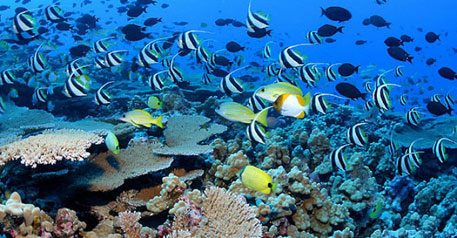 Oceans produce almost half of all the oxygen and absorbs more than a quarter of the carbon dioxide in the earth's atmosphere