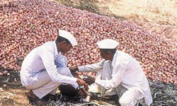 Maharashtra farmers threaten stir over inclusion of onion as essential commodity