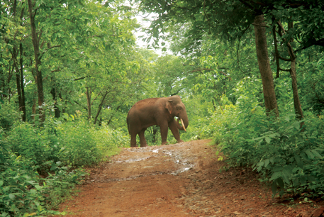 The decision to have a five-kilometre eco-sensitive zone around Dalma wildlife sanctuary has irked Tata Steel