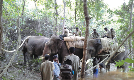 Three of the four trained elephants of the Karnataka forest department on duty deep inside the jungles of the Mangaon valley in Sindhudurg