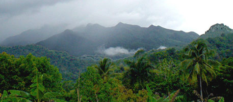 El Yunque National Forest in Puerto Rico is home to several species of trees which are not found anywhere else in the world