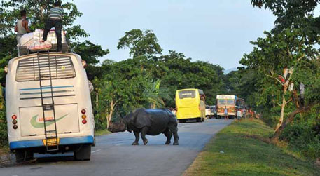 Assam government wants to build flyovers for Kaziranga rhinos