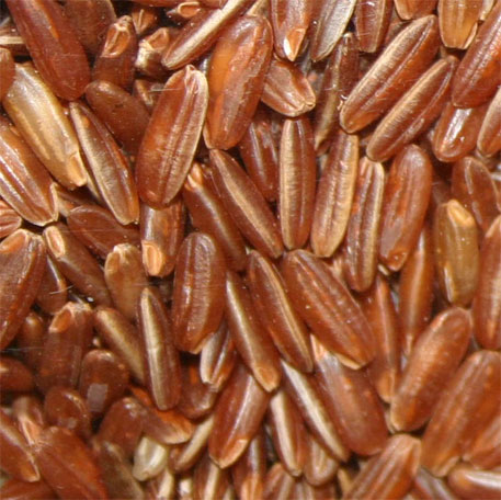 African rice genome decoded