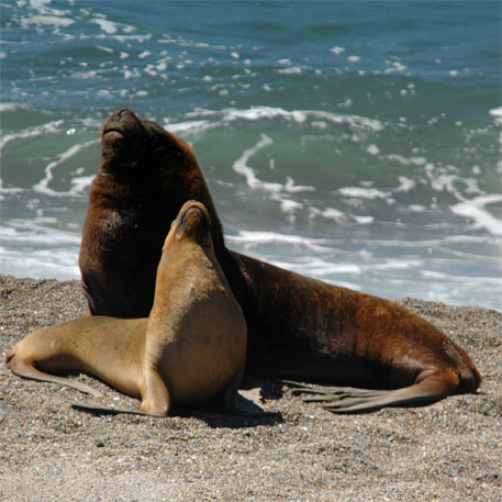 Peru investigating death of 500 sea lions