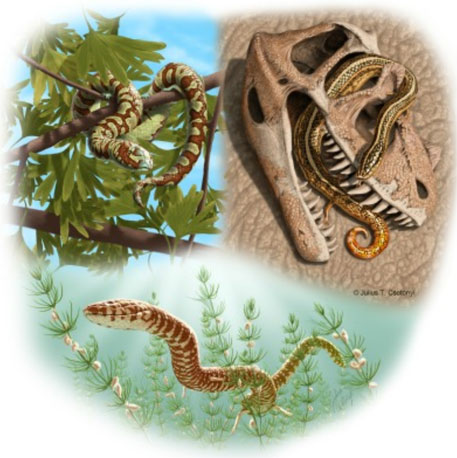 World's oldest snake fossils discovered