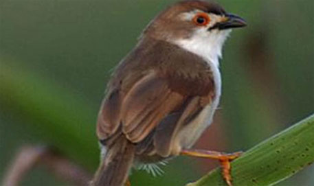 Bird considered extinct rediscovered in Myanmar