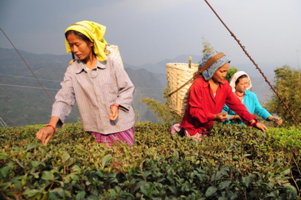 Workers missing from tea gardens of north Bengal and Assam