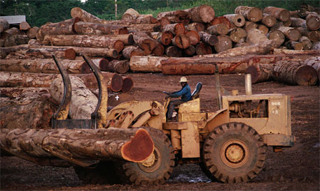 Illegal logging major threat to development in west Africa: FAO