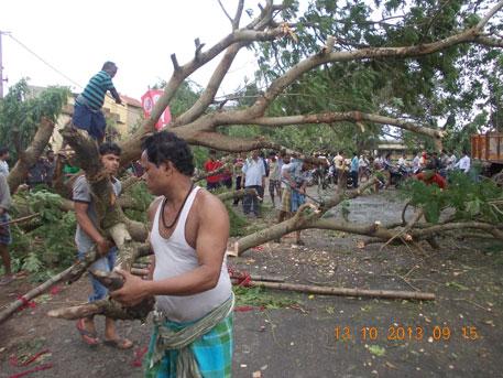 Tree uprooted by cyclone Phailin (credit Ashis Senapati)