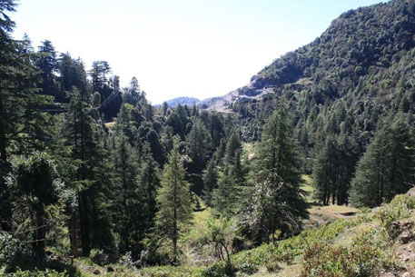 Since 1980, 44,868 ha of forestland in Uttarakhand have been diverted to non-forest use (Courtesy: Raju Kasambe)