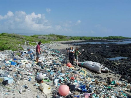 Marine debris on Kamilo Beach, Hawaii, washed up from the Great Pacific Garbage Patch (photo Courtesy Algalita dot org and Wikipedia)
