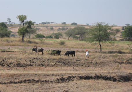 Another 5,700 villages on Maharashtra's drought list