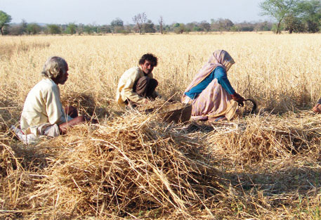 Will India's wheat imports lead to global food crisis?
