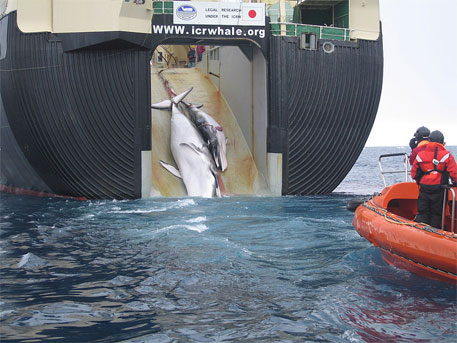 Japan leads opposition to establishing marine sanctuary for whales