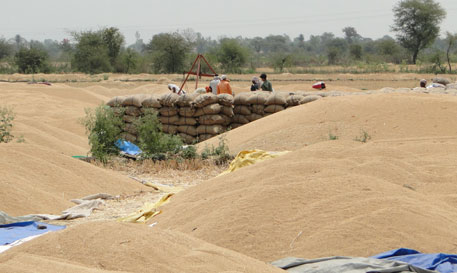 Farmers are waiting to sell their wheat at a Gehun Khareed Kendra in Madhya Pradesh. Due to scarcity of gunny bags, farmers are forced to dump foodgrains in the open near the centre (Photograph by Rakesh Kumar Malviya)