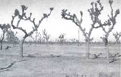 Trees in dry zone need protection